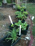 Garden 2012-2