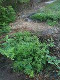 Garden 2012-4